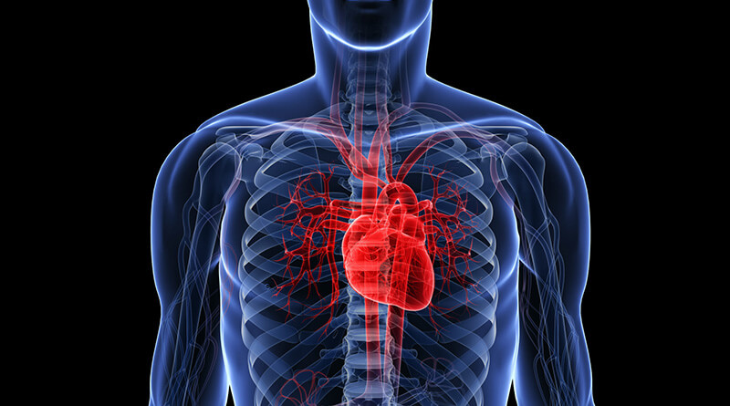 where is heart located in body